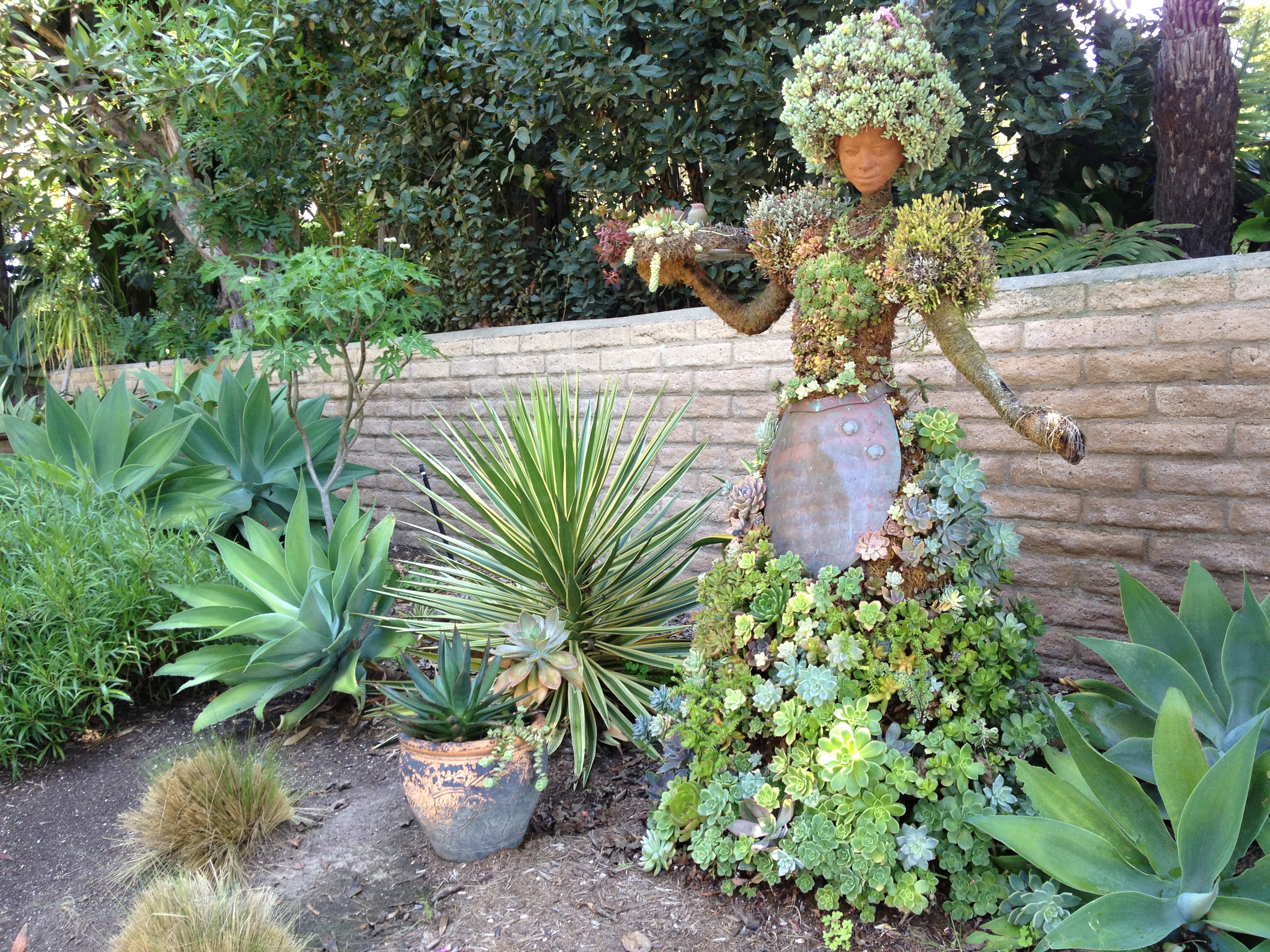 Living Lady Of Succulents Small Garden Ideas Pinterest